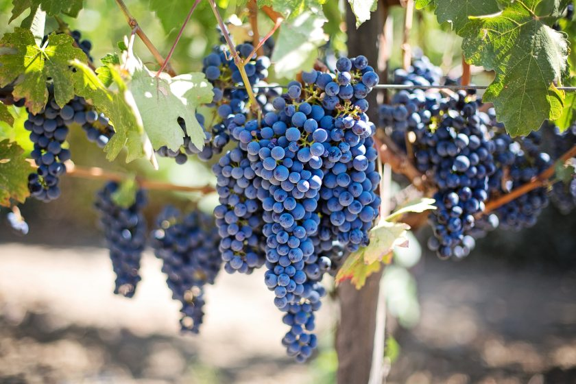 fruits-grapes-grapevines-45209
